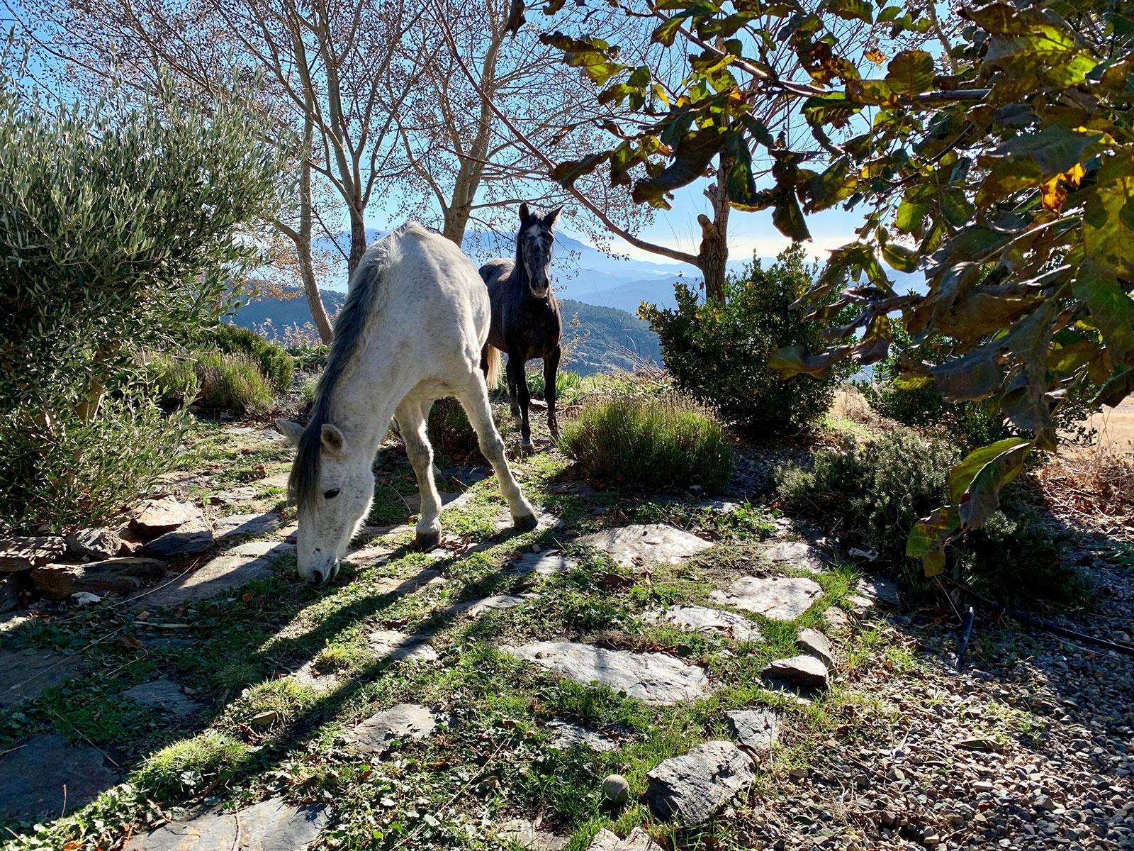 Villhester på tunet til Pure Mountains - Reisebrev fra Flytsti